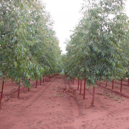 Implantação de Florestas
