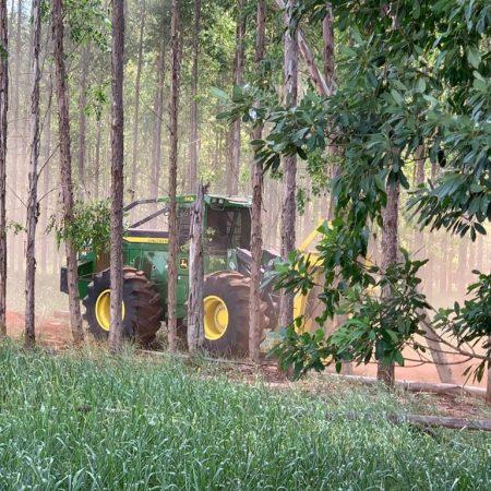 Manutenção de Florestas