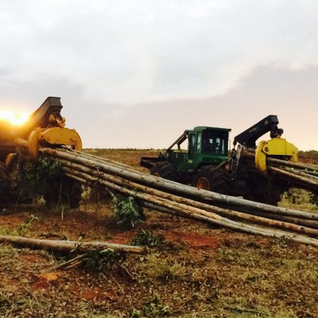 Colheita Florestal Mecanizada